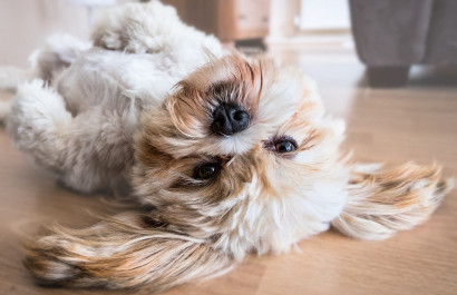 Navigate the Property Market as a Dog Owner