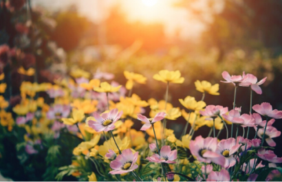 Gardening Ideas for Spring