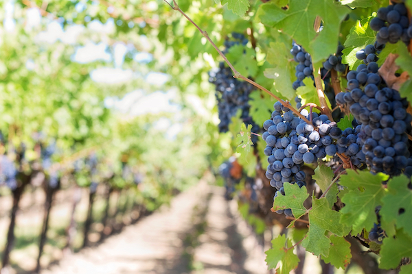 OKANAGAN WINE TOURS START HERE!!