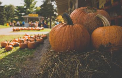 Best Pumpkin Patches this Fall - Austin, TX