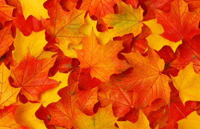 How to Successfully Sell in the Fall