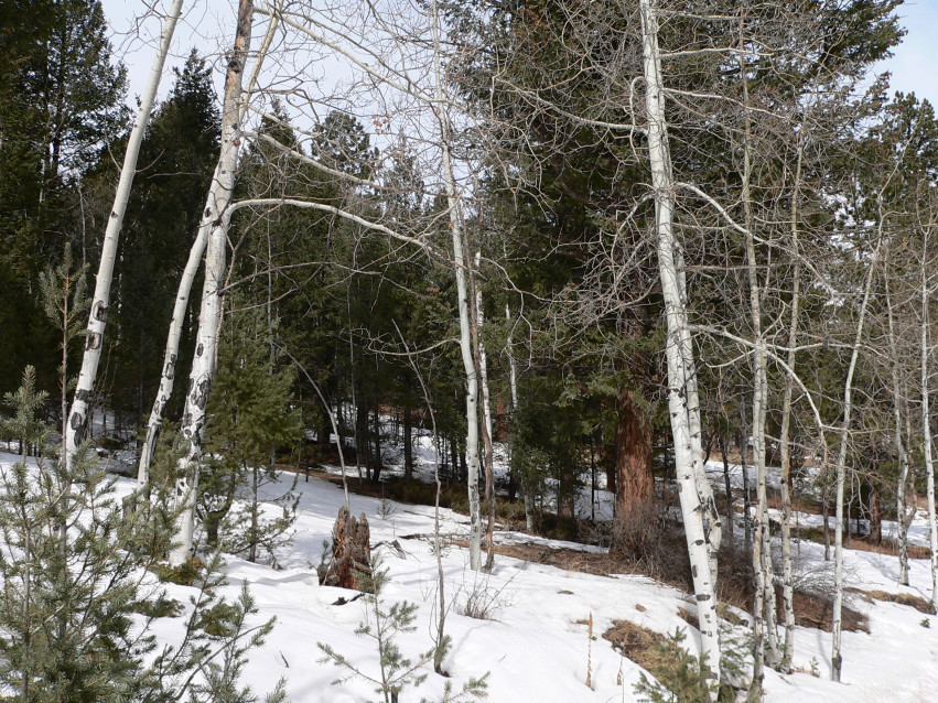 3 Acres in Pine