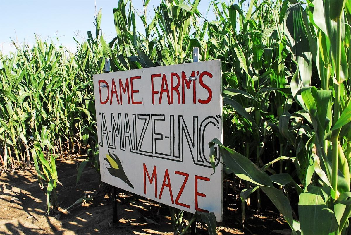 A-Maize-ing Corn Maze