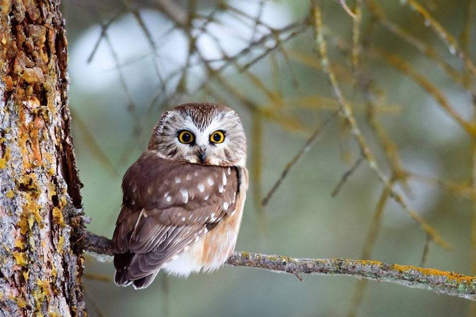 Owls & Ales