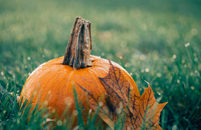 Fall Fun in the Colorado Foothills