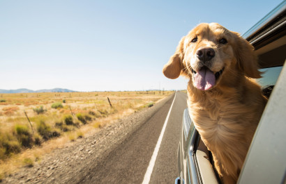 How to Move With Your Pets in 4 Easy Steps