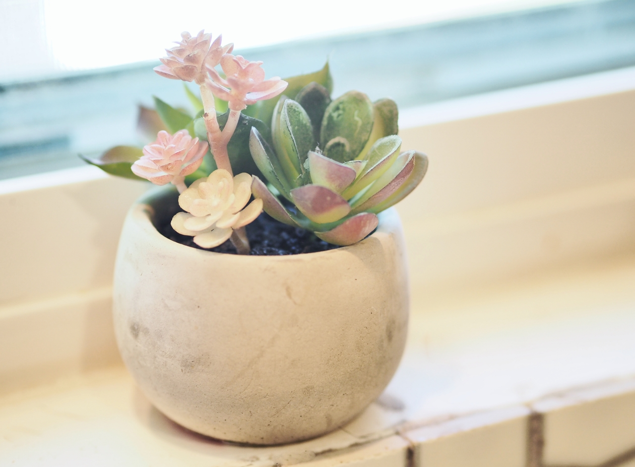 Fuss-free succulents and cacti are frequently seen in Central Austin home interiors