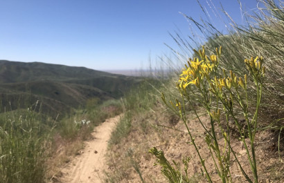 Summer Day Hikes in Boise